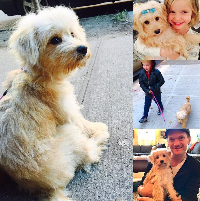 Det Burtka-Harris Clan Adopts a Puppy
